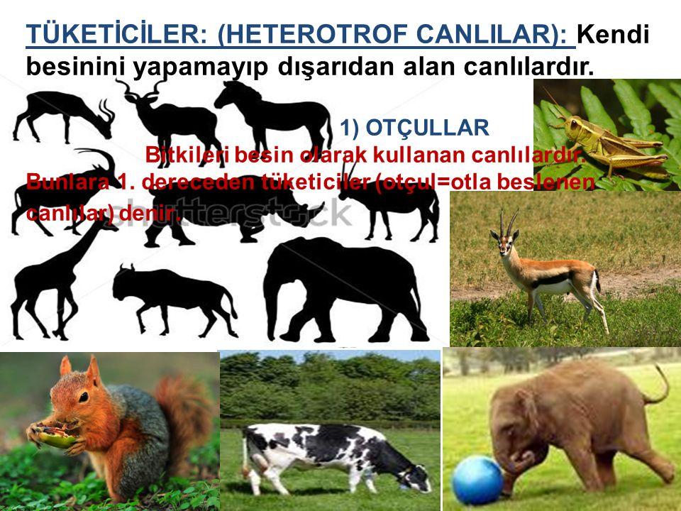 TÜKETİCİLER: (HETEROTROF CANLILAR): Kendi besinini yapamayıp dışarıdan alan canlılardır. 1) OTÇULLAR Bitkileri besin olarak kullanan canlılardır. Bunl