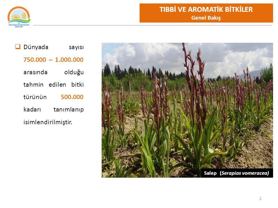 2 Salep (Serapias vomeracea) TIBBİ VE AROMATİK BİTKİLER Genel Bakış  Dünyada sayısı 750.000 – 1.000.000 arasında olduğu tahmin edilen bitki türünün 500.000 kadarı tanımlanıp isimlendirilmiştir.