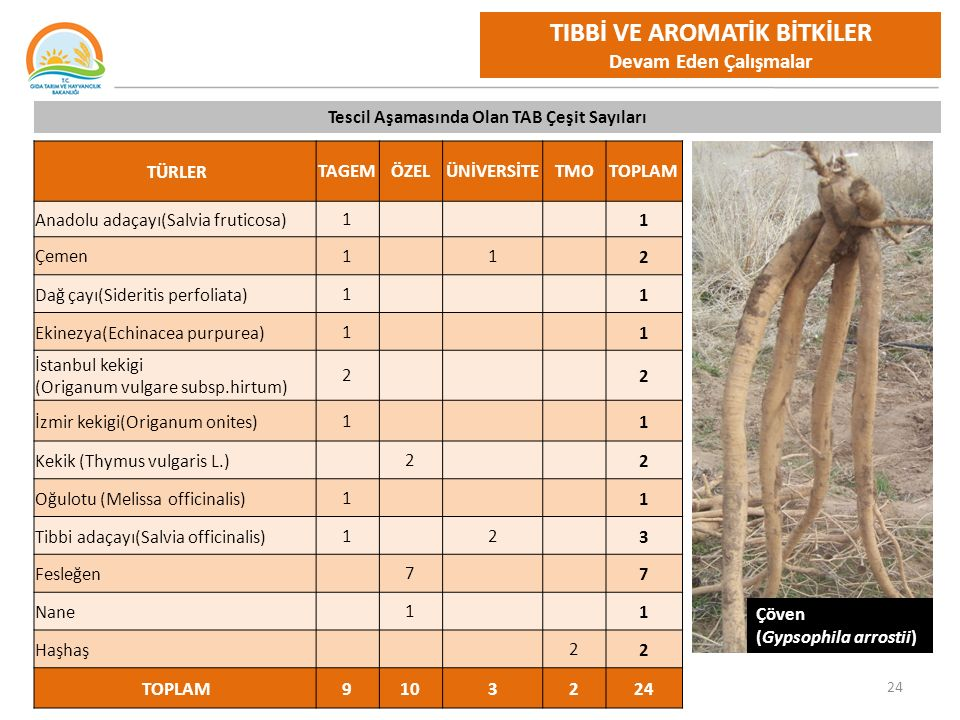 24 TIBBİ VE AROMATİK BİTKİLER Devam Eden Çalışmalar TÜRLERTAGEMÖZELÜNİVERSİTETMOTOPLAM Anadolu adaçayı(Salvia fruticosa)1 1 Çemen1 1 2 Dağ çayı(Sideritis perfoliata)1 1 Ekinezya(Echinacea purpurea)1 1 İstanbul kekigi (Origanum vulgare subsp.hirtum) 2 2 İzmir kekigi(Origanum onites)1 1 Kekik (Thymus vulgaris L.) 2 2 Oğulotu (Melissa officinalis)1 1 Tibbi adaçayı(Salvia officinalis)1 2 3 Fesleğen 7 7 Nane 1 1 Haşhaş 22 TOPLAM9103224 Tescil Aşamasında Olan TAB Çeşit Sayıları Çöven (Gypsophila arrostii)