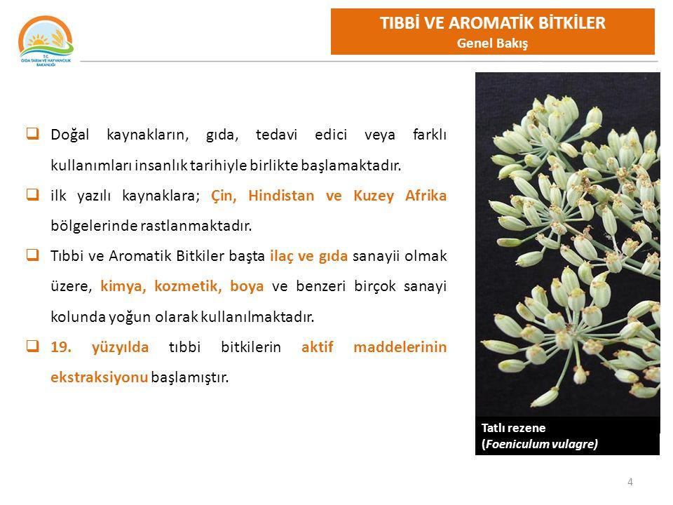 25 TIBBİ VE AROMATİK BİTKİLER Devam Eden Çalışmalar Halihazırda Devam Eden Proje Konuları ve Türler AGRONOMİ ÇALIŞMALARIISLAHKALİTEKÜLTÜRE ALMA Boya Bitkileri 23 türde,Anadolu Ada ÇayıBoya Bitkileri 23 türde,Gölsoğanı İstanbul KekiğiAnasonKantaronMeyan KapariÇörekotuKapariOrthus heterocarpus KarabuğdayDağçayıTAB Uçucu ve sabit yağlar KekikDefne Thymus ve Origanum türleri Uçucu Yağları (Antibakteriyel Etki) KonyakEkinezyaŞevketi Bostan LavantaGölsoğanı LimonotuHaşhaş SafranKarabuğday SakızKimyon SalepKuşburnu SalepOğulotu ŞekerotuSafran Yağ gülüSalep Şekerotu şevketi bostan Tatlı Rezene