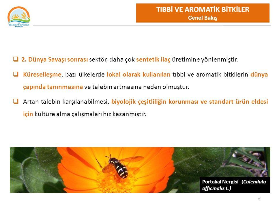 7 Rezene (Foeniculum vulgare L.) TIBBİ VE AROMATİK BİTKİLER Türkiye ve Dünyada Üretim ve Ticaret