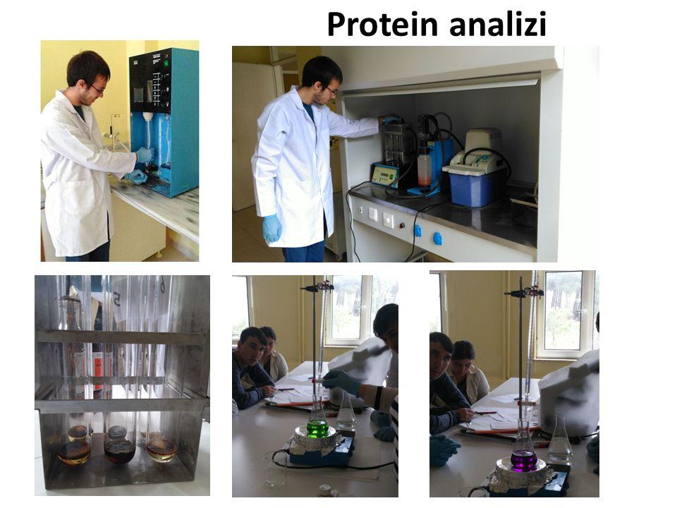 Protein analizi