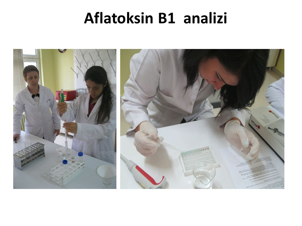 Aflatoksin B1 analizi