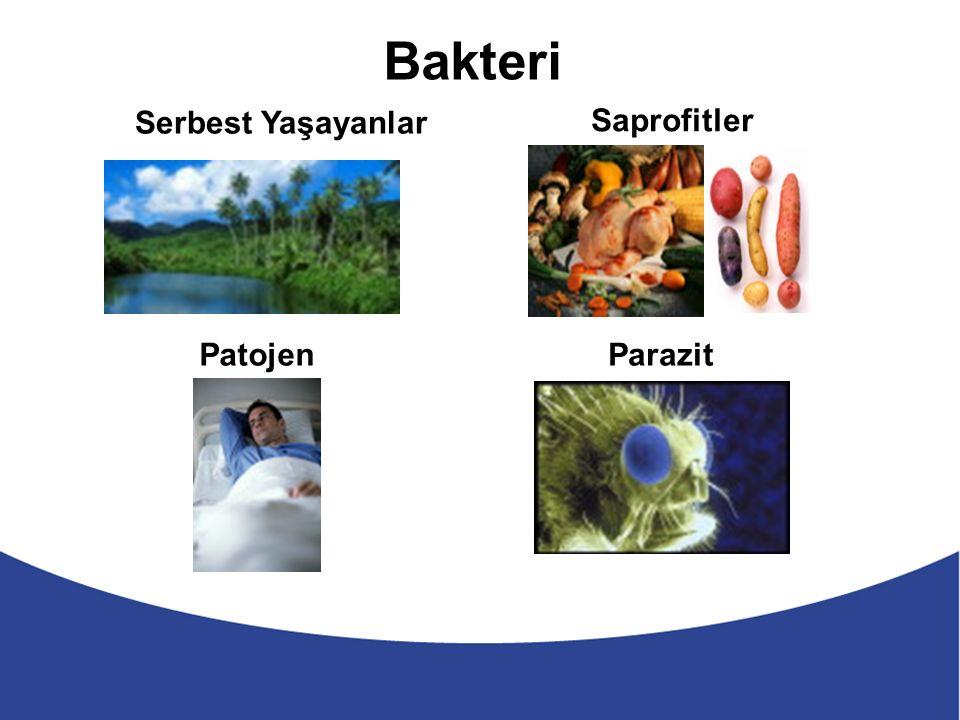 Serbest Yaşayanlar Bakteri Saprofitler Patojen Parazit