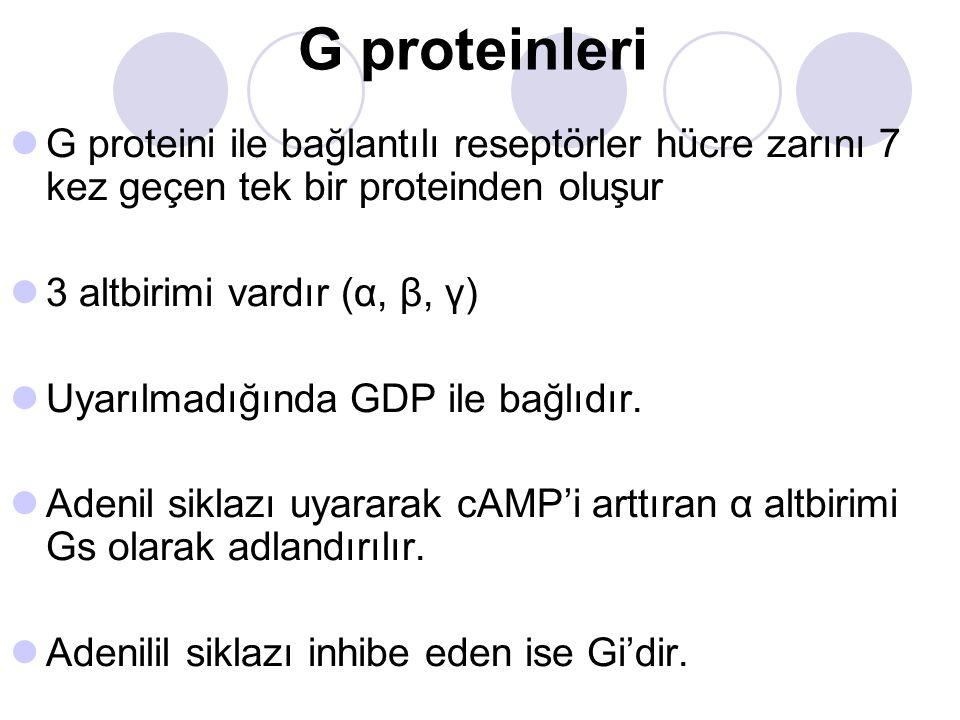 G proteinleri G proteini ile bağlantılı reseptörler hücre zarını 7 kez geçen tek bir proteinden oluşur 3 altbirimi vardır (α, β, γ) Uyarılmadığında GD