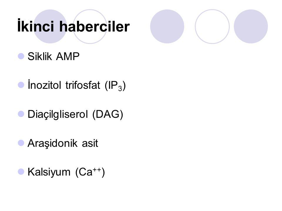 İkinci haberciler Siklik AMP İnozitol trifosfat (IP 3 ) Diaçilgliserol (DAG) Araşidonik asit Kalsiyum (Ca ++ )