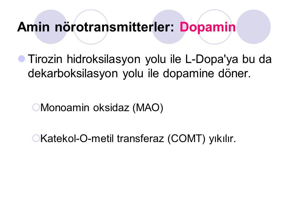 Amin nörotransmitterler: Dopamin Tirozin hidroksilasyon yolu ile L-Dopa'ya bu da dekarboksilasyon yolu ile dopamine döner.  Monoamin oksidaz (MAO) 