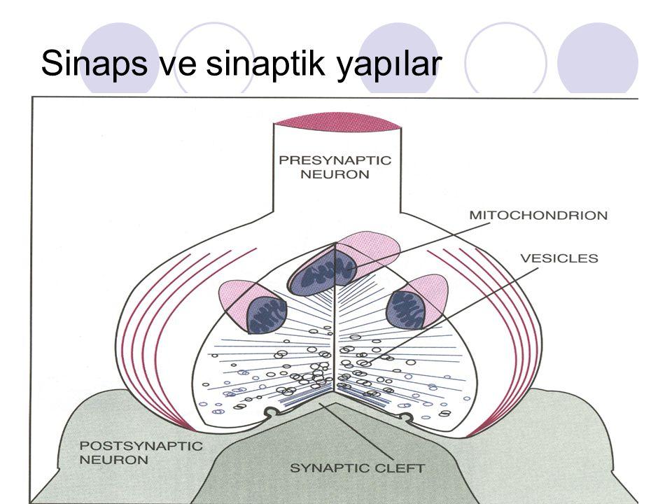 Nörotransmitterler Etkilerini pre ve postsinaptik zarda gösterirler.
