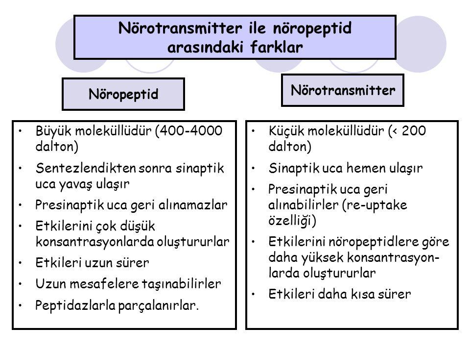 Nörotransmitter ile nöropeptid arasındaki farklar Büyük moleküllüdür (400-4000 dalton) Sentezlendikten sonra sinaptik uca yavaş ulaşır Presinaptik uca