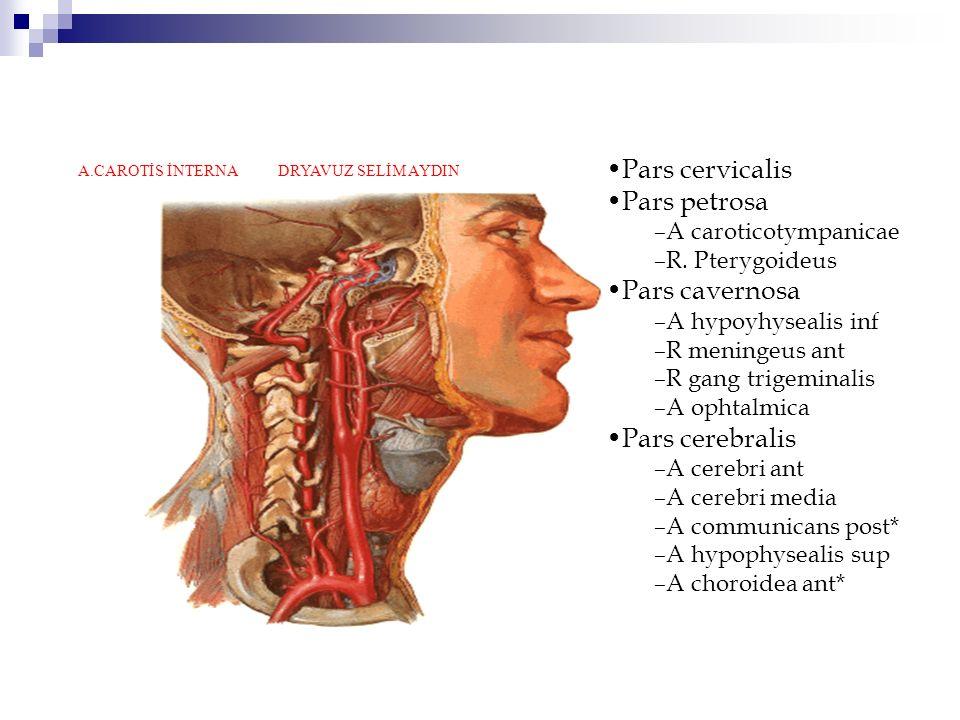 Pars cervicalis Pars petrosa –A caroticotympanicae –R.