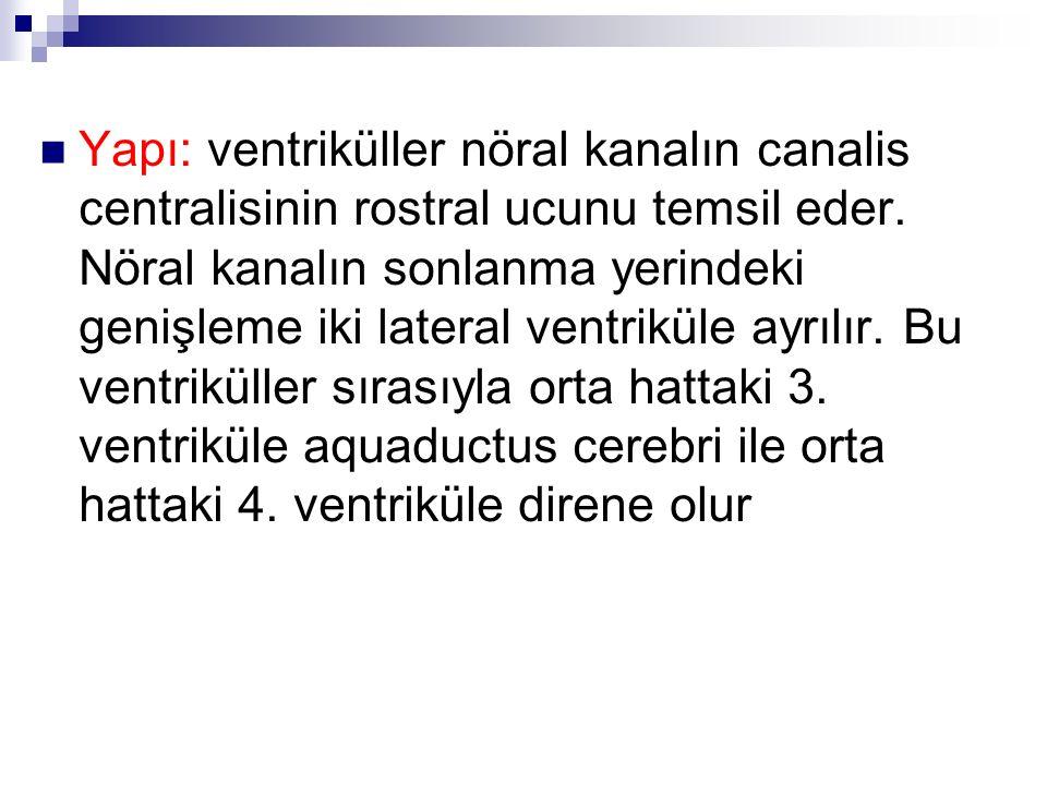Frontal kateter uzunluğu 1 / 3 Oksipital kateter uzunluğu 2 / 3