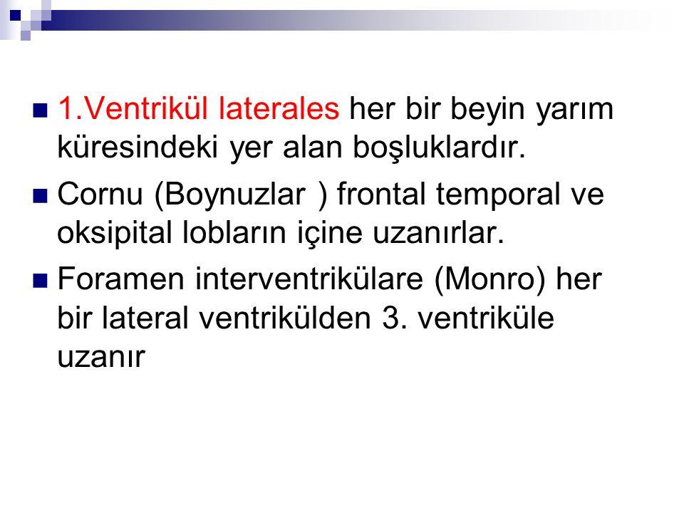 2.Ventrikülüs tertius (3.
