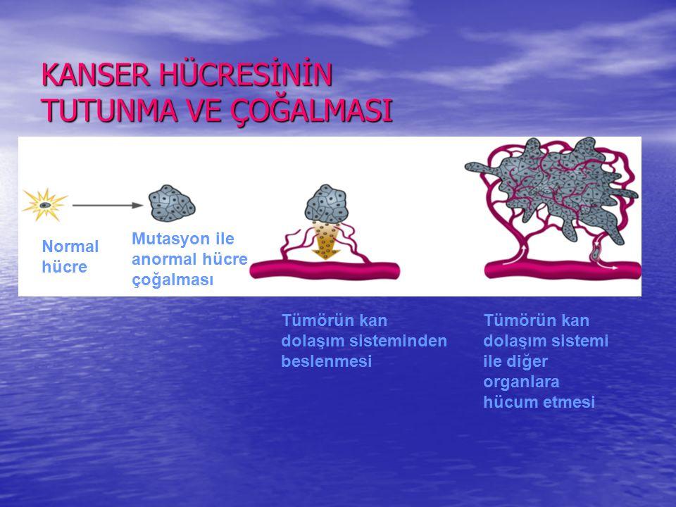 KANSER HÜCRESİNİN TUTUNMA VE ÇOĞALMASI Normal hücre Mutasyon ile anormal hücre çoğalması Tümörün kan dolaşım sisteminden beslenmesi Tümörün kan dolaşım sistemi ile diğer organlara hücum etmesi