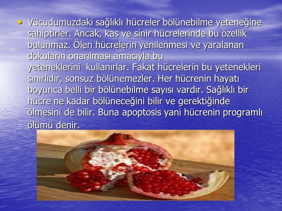 Kadınlarda Yerleşim Yerlerine Göre En Sık Görülen Kanserler, (Türkiye de)