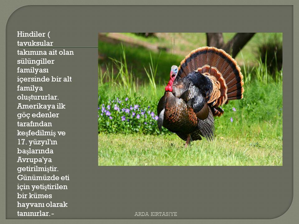 Hindiler ( tavuksular takımına ait olan sülüngiller familyası içersinde bir alt familya olu ş tururlar.