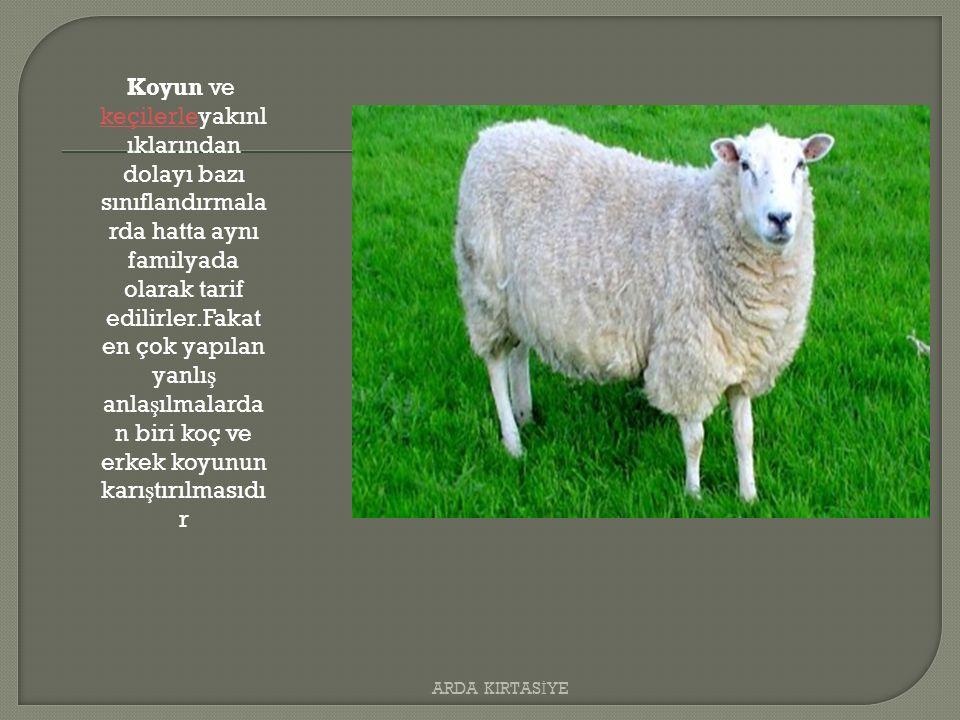 Koyun ve keçilerleyakınl ıklarından dolayı bazı sınıflandırmala rda hatta aynı familyada olarak tarif edilirler.Fakat en çok yapılan yanlı ş anla ş ılmalarda n biri koç ve erkek koyunun karı ş tırılmasıdı r keçilerle ARDA KIRTAS İ YE