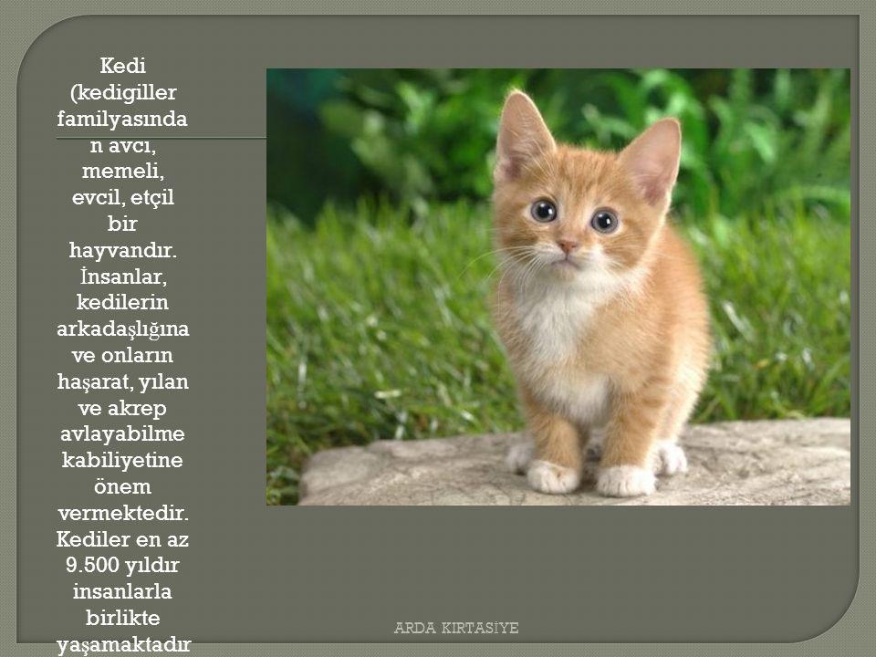 Kedi (kedigiller familyasında n avcı, memeli, evcil, etçil bir hayvandır.