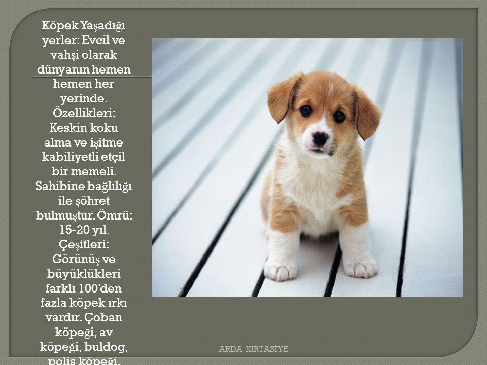 Köpek Ya ş adı ğ ı yerler: Evcil ve vah ş i olarak dünyanın hemen hemen her yerinde.