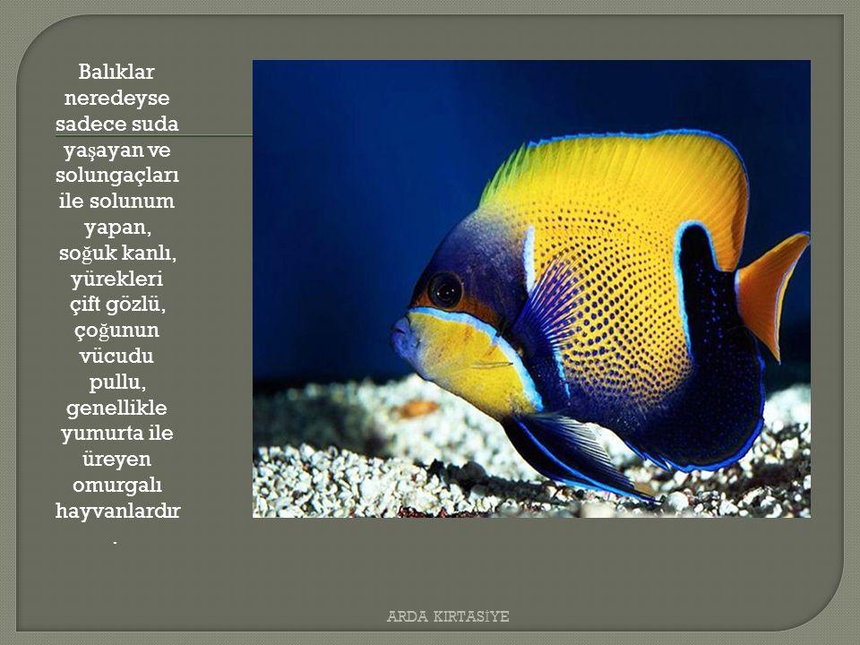Balıklar neredeyse sadece suda ya ş ayan ve solungaçları ile solunum yapan, so ğ uk kanlı, yürekleri çift gözlü, ço ğ unun vücudu pullu, genellikle yumurta ile üreyen omurgalı hayvanlardır.
