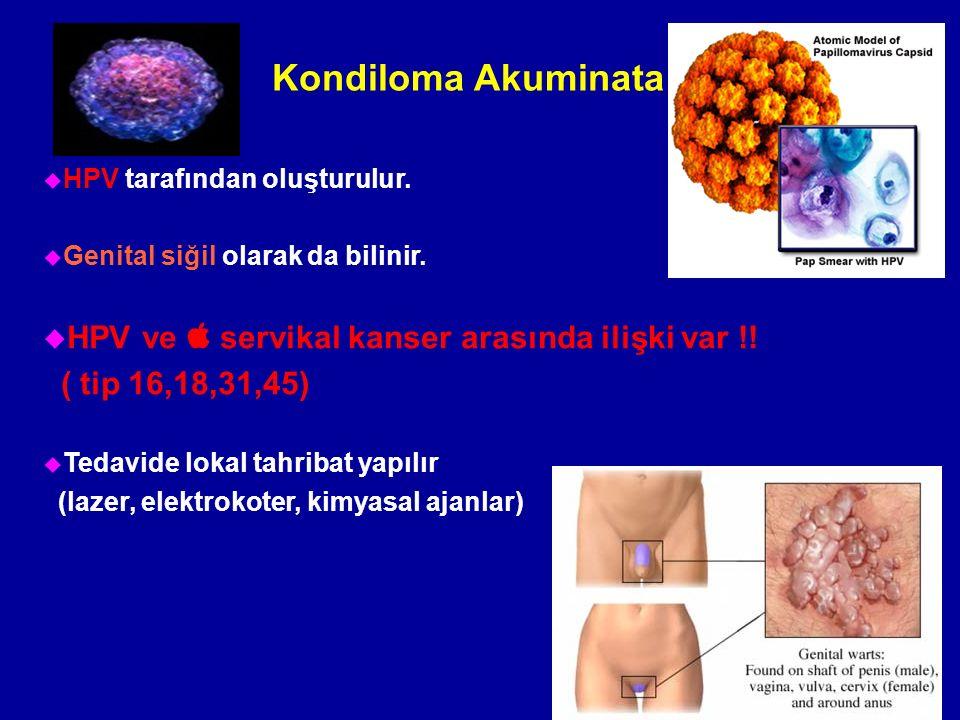 Kondiloma Akuminata u HPV tarafından oluşturulur. u Genital siğil olarak da bilinir.  HPV ve  servikal kanser arasında ilişki var !! ( tip 16,18,31,