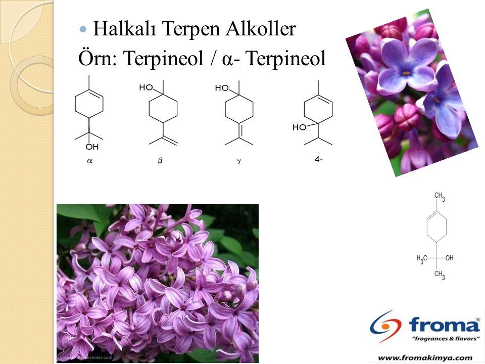 Halkalı Terpen Alkoller Örn: Terpineol / α- Terpineol