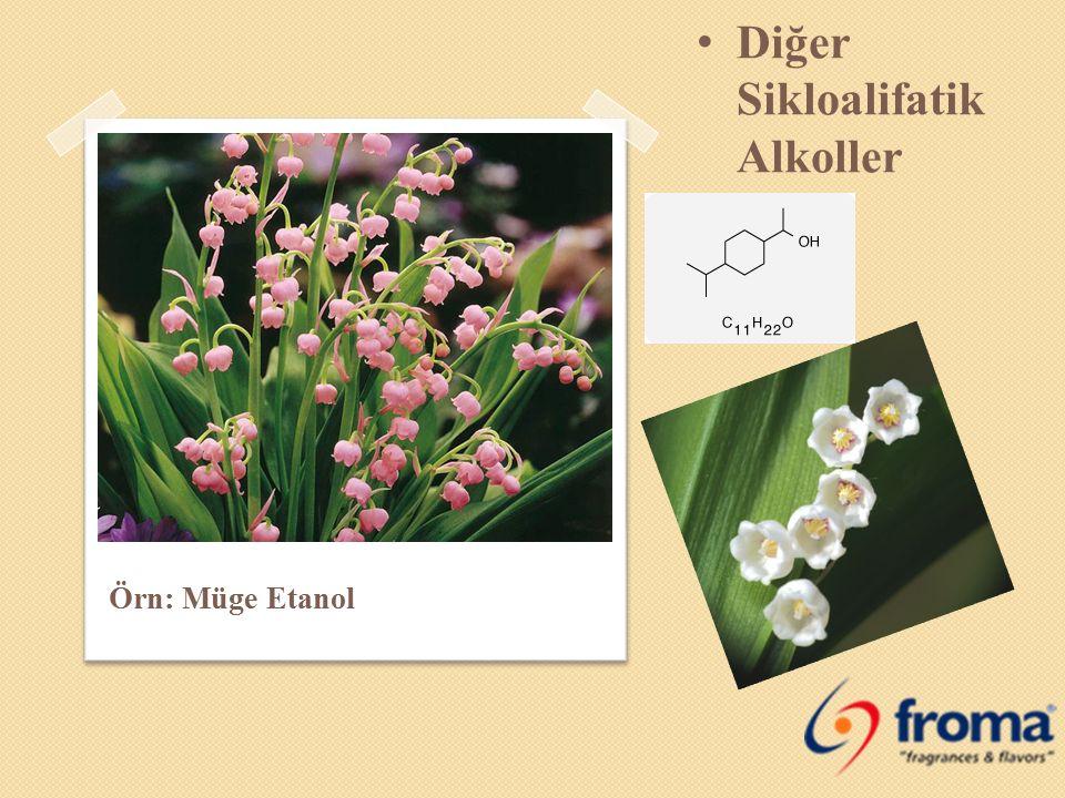 Diğer Sikloalifatik Alkoller Örn: Müge Etanol