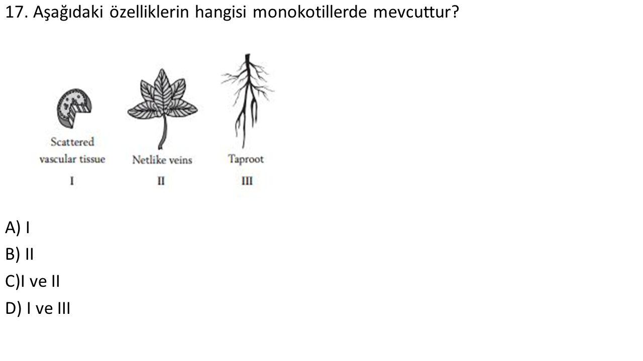 17. Aşağıdaki özelliklerin hangisi monokotillerde mevcuttur? A) I B) II C)I ve II D) I ve III