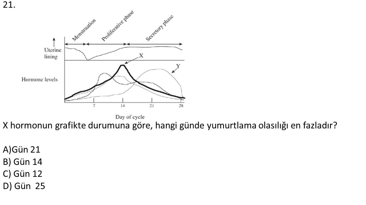 21. X hormonun grafikte durumuna göre, hangi günde yumurtlama olasılığı en fazladır? A)Gün 21 B) Gün 14 C) Gün 12 D) Gün 25