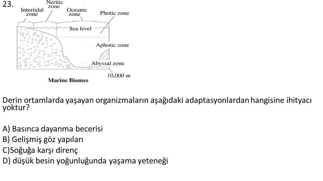23. Derin ortamlarda yaşayan organizmaların aşağıdaki adaptasyonlardan hangisine ihityacı yoktur? A) Basınca dayanma becerisi B) Gelişmiş göz yapıları