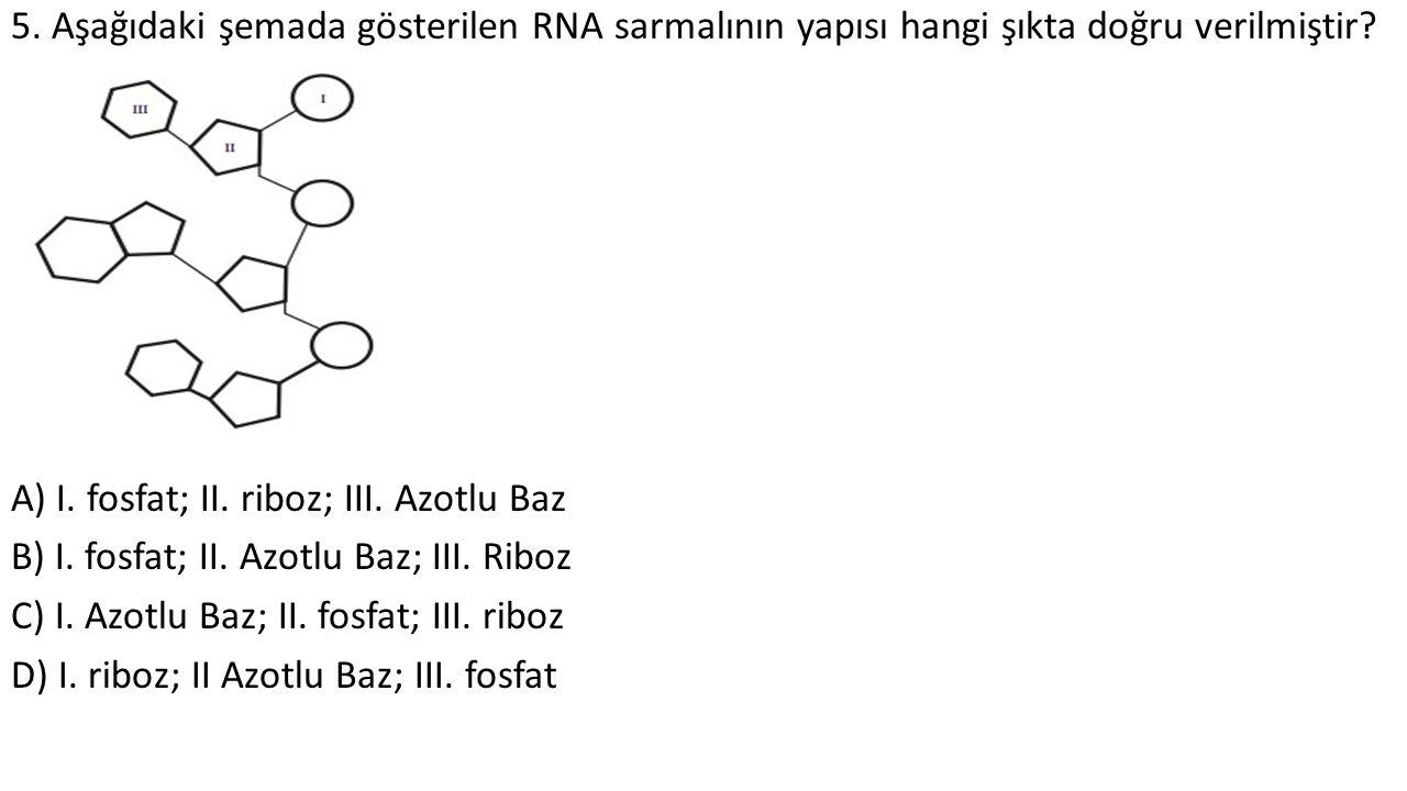 5. Aşağıdaki şemada gösterilen RNA sarmalının yapısı hangi şıkta doğru verilmiştir? A) I. fosfat; II. riboz; III. Azotlu Baz B) I. fosfat; II. Azotlu