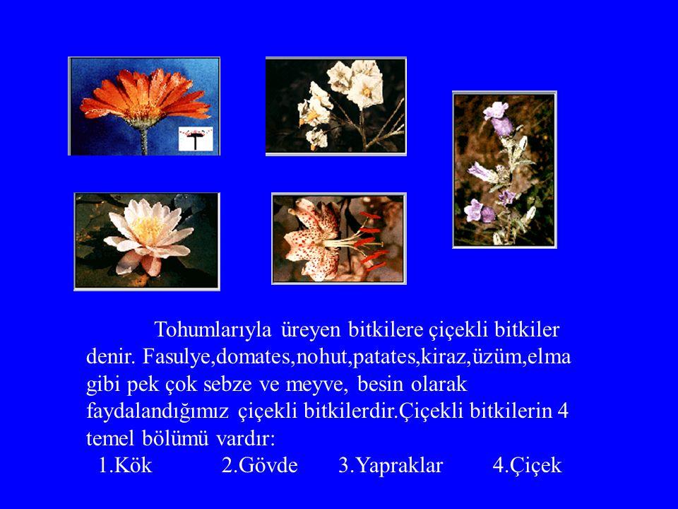 Tohumlarıyla üreyen bitkilere çiçekli bitkiler denir.