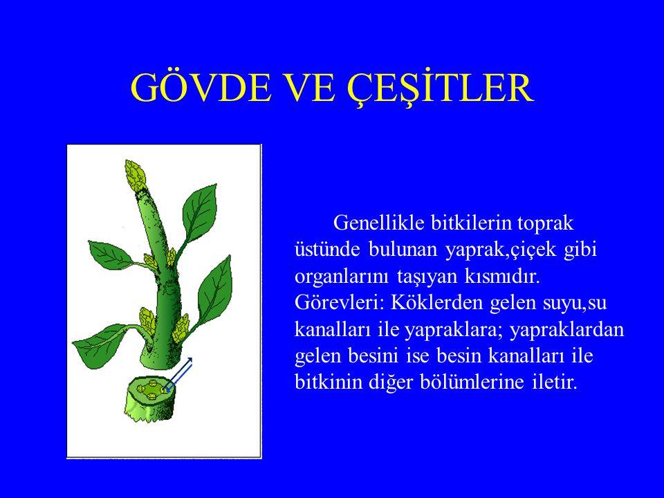 GÖVDE VE ÇEŞİTLER Genellikle bitkilerin toprak üstünde bulunan yaprak,çiçek gibi organlarını taşıyan kısmıdır.