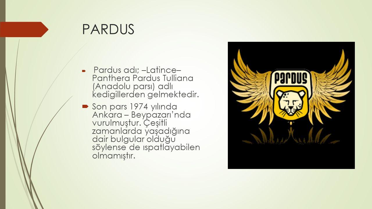 PARDUS  Pardus adı; –Latince– Panthera Pardus Tulliana (Anadolu parsı) adlı kedigillerden gelmektedir.