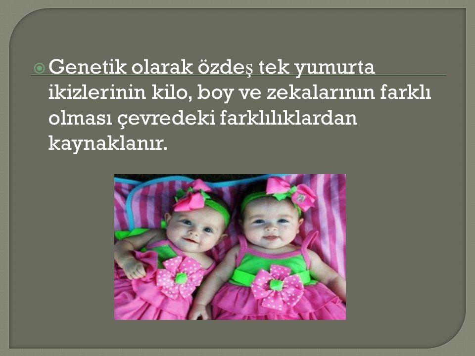  Genetik olarak özde ş tek yumurta ikizlerinin kilo, boy ve zekalarının farklı olması çevredeki farklılıklardan kaynaklanır.