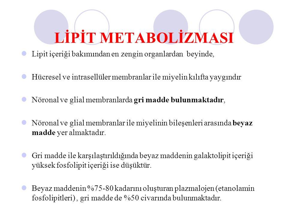 LİPİT METABOLİZMASI Lipit içeriği bakımından en zengin organlardan beyinde, Hücresel ve intrasellüler membranlar ile miyelin kılıfta yaygındır Nöronal