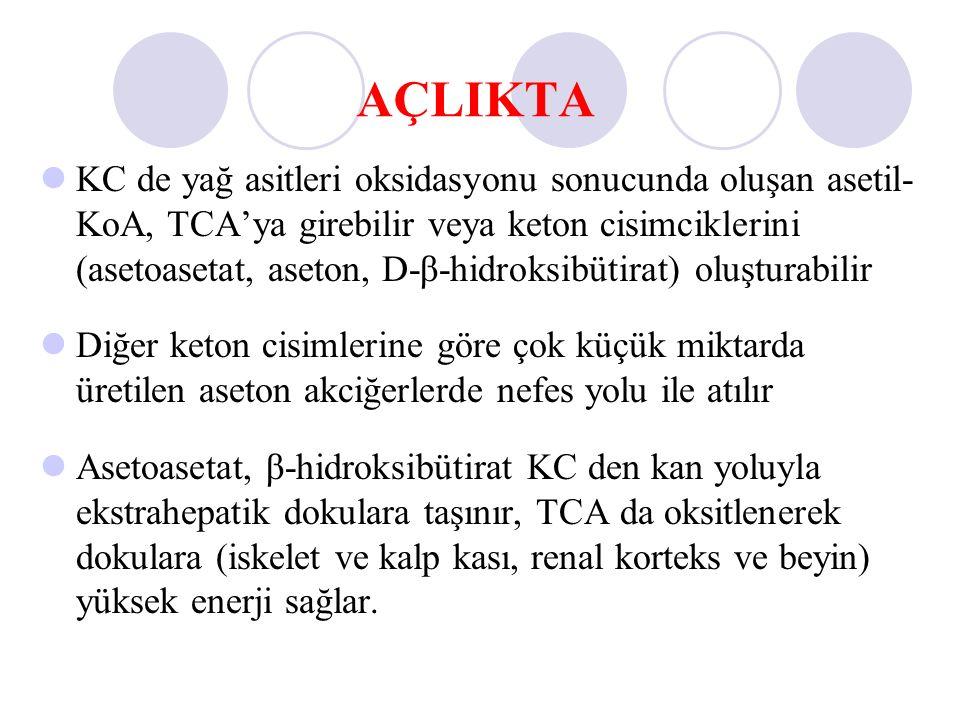 AÇLIKTA KC de yağ asitleri oksidasyonu sonucunda oluşan asetil- KoA, TCA'ya girebilir veya keton cisimciklerini (asetoasetat, aseton, D-β-hidroksibüti