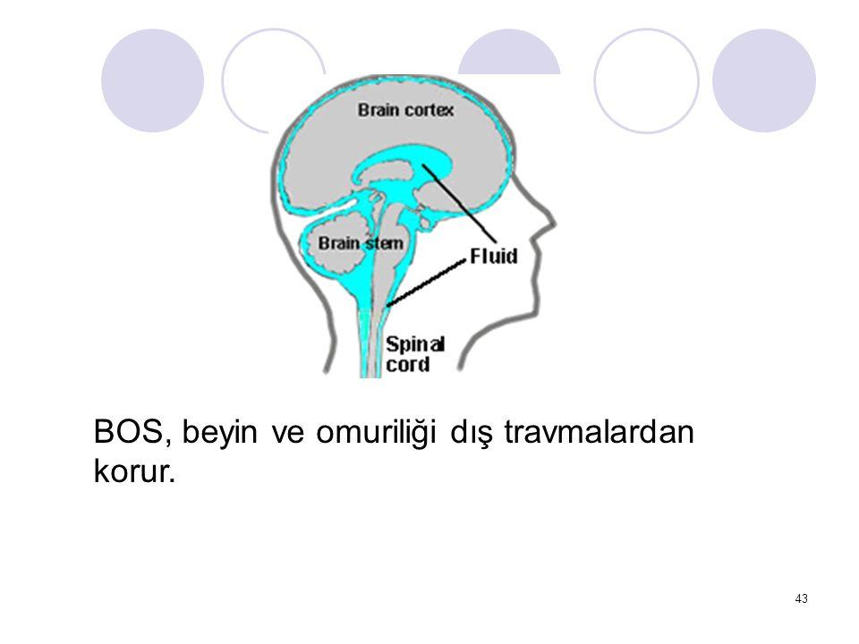 43 BOS, beyin ve omuriliği dış travmalardan korur.