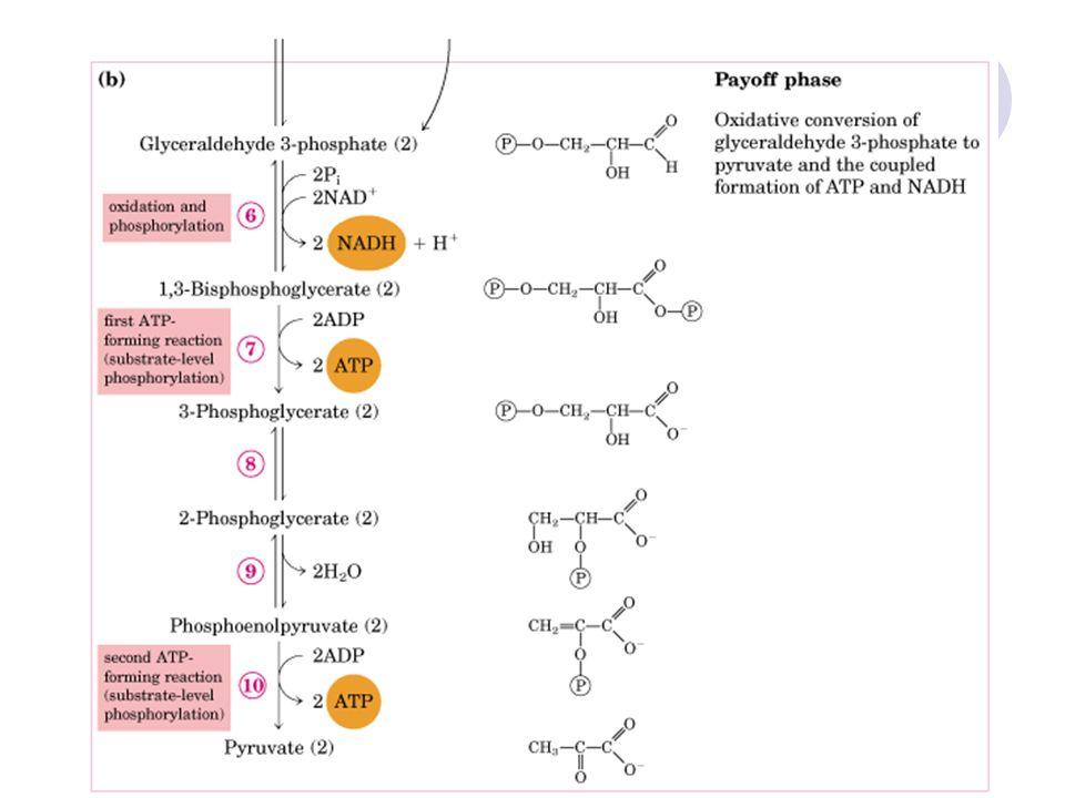 56 Primer beyin tümörlerinin tanısı için glukoz fosfat izomeraz tayini yapılır.