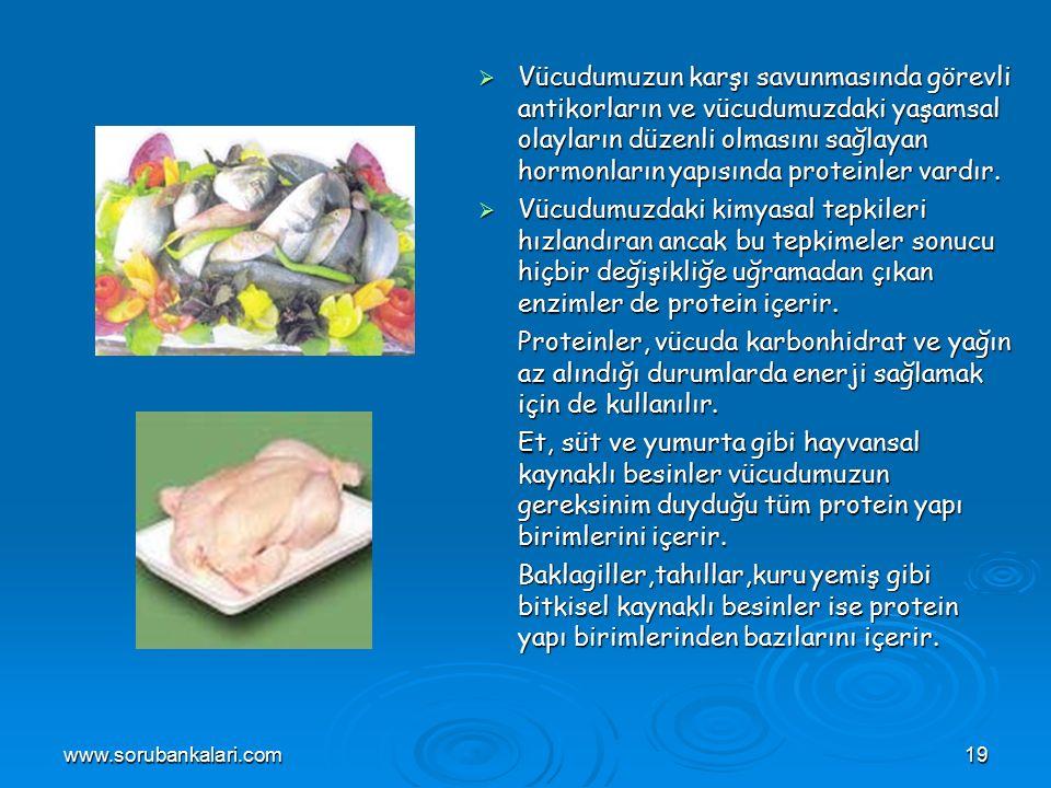 www.sorubankalari.com19  Vücudumuzun karşı savunmasında görevli antikorların ve vücudumuzdaki yaşamsal olayların düzenli olmasını sağlayan hormonların yapısında proteinler vardır.