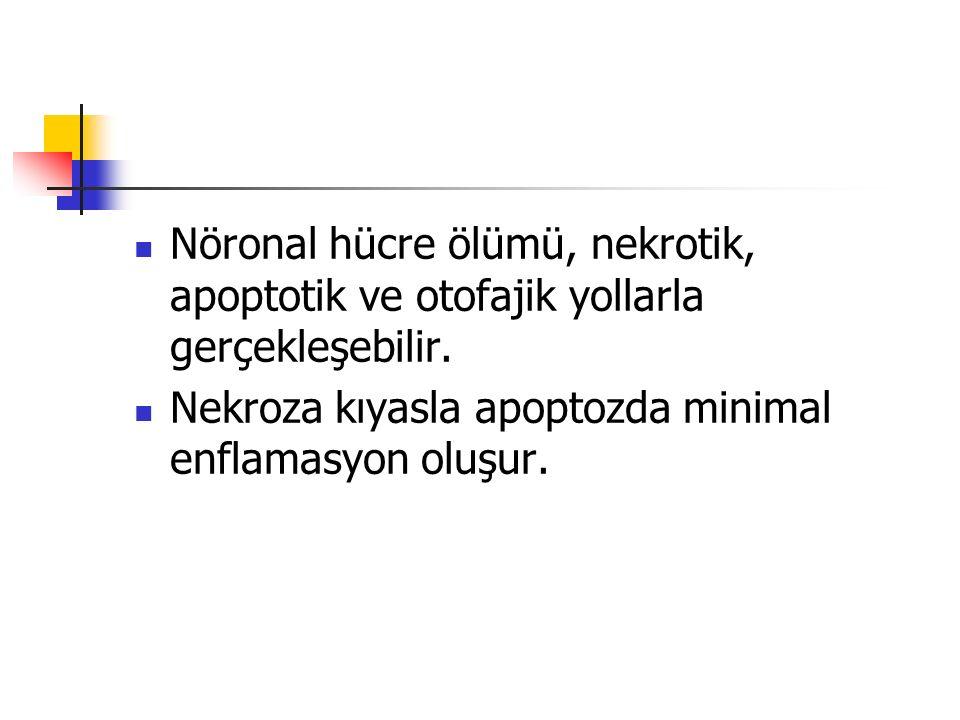 Nöronal hücre ölümü, nekrotik, apoptotik ve otofajik yollarla gerçekleşebilir. Nekroza kıyasla apoptozda minimal enflamasyon oluşur.