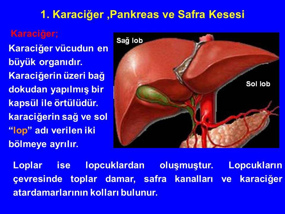 1. Karaciğer,Pankreas ve Safra Kesesi Karaciğer vücudun en büyük organıdır.
