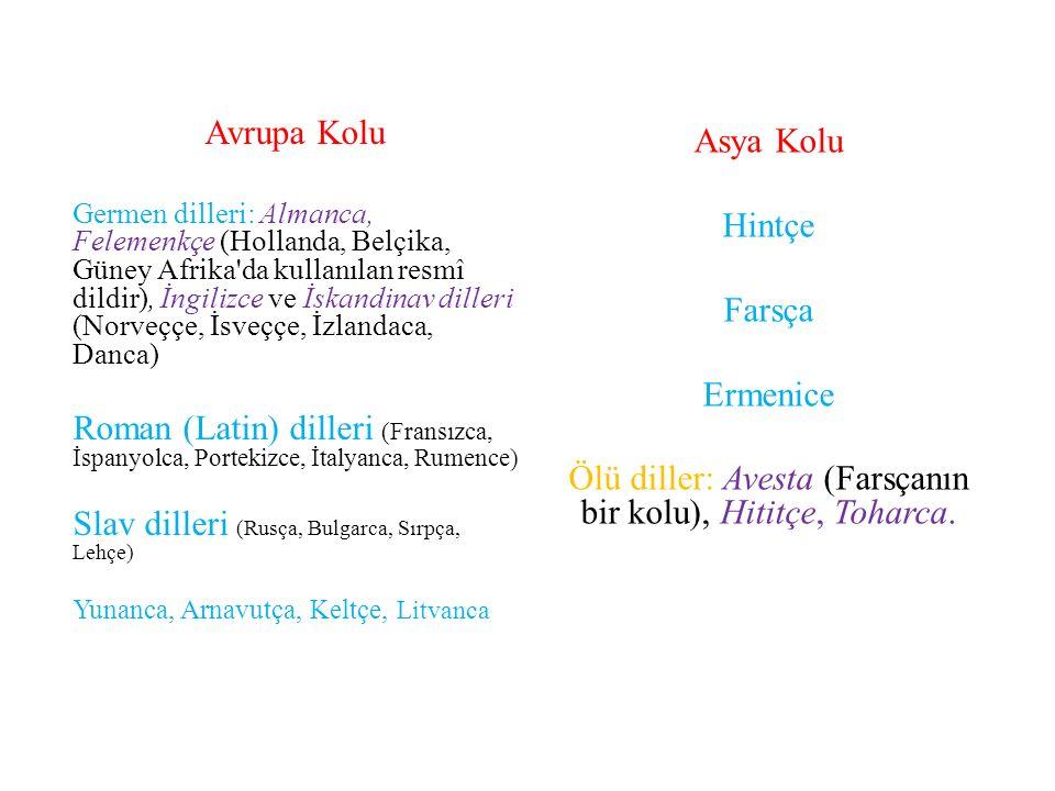 Avrupa Kolu Germen dilleri: Almanca, Felemenkçe (Hollanda, Belçika, Güney Afrika da kullanılan resmî dildir), İngilizce ve İskandinav dilleri (Norveççe, İsveççe, İzlandaca, Danca) Roman (Latin) dilleri (Fransızca, İspanyolca, Portekizce, İtalyanca, Rumence) Slav dilleri (Rusça, Bulgarca, Sırpça, Lehçe) Yunanca, Arnavutça, Keltçe, Litvanca Asya Kolu Hintçe Farsça Ermenice Ölü diller: Avesta (Farsçanın bir kolu), Hititçe, Toharca.