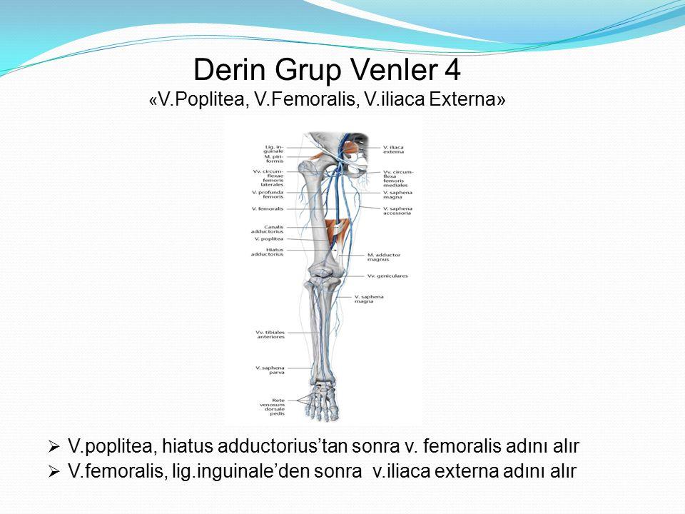 Derin Grup Venler 4 « V.Poplitea, V.Femoralis, V.iliaca Externa»  V.poplitea, hiatus adductorius'tan sonra v. femoralis adını alır  V.femoralis, lig