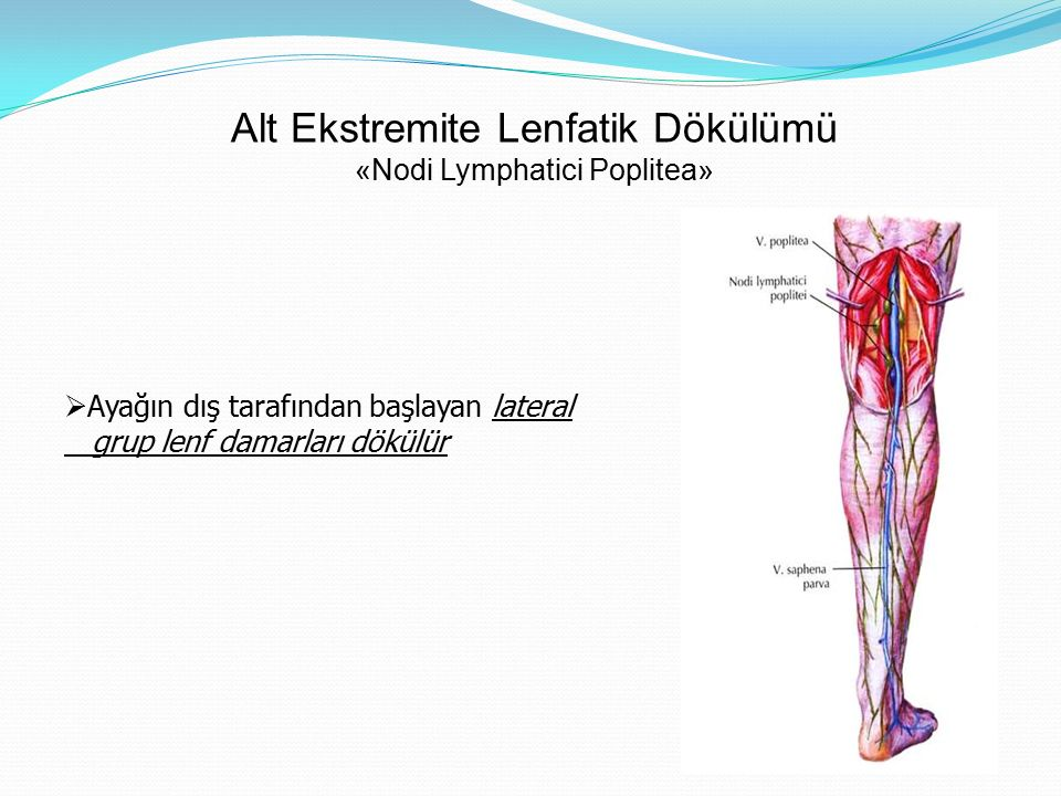 Alt Ekstremite Lenfatik Dökülümü «Nodi Lymphatici Poplitea»  Ayağın dış tarafından başlayan lateral grup lenf damarları dökülür
