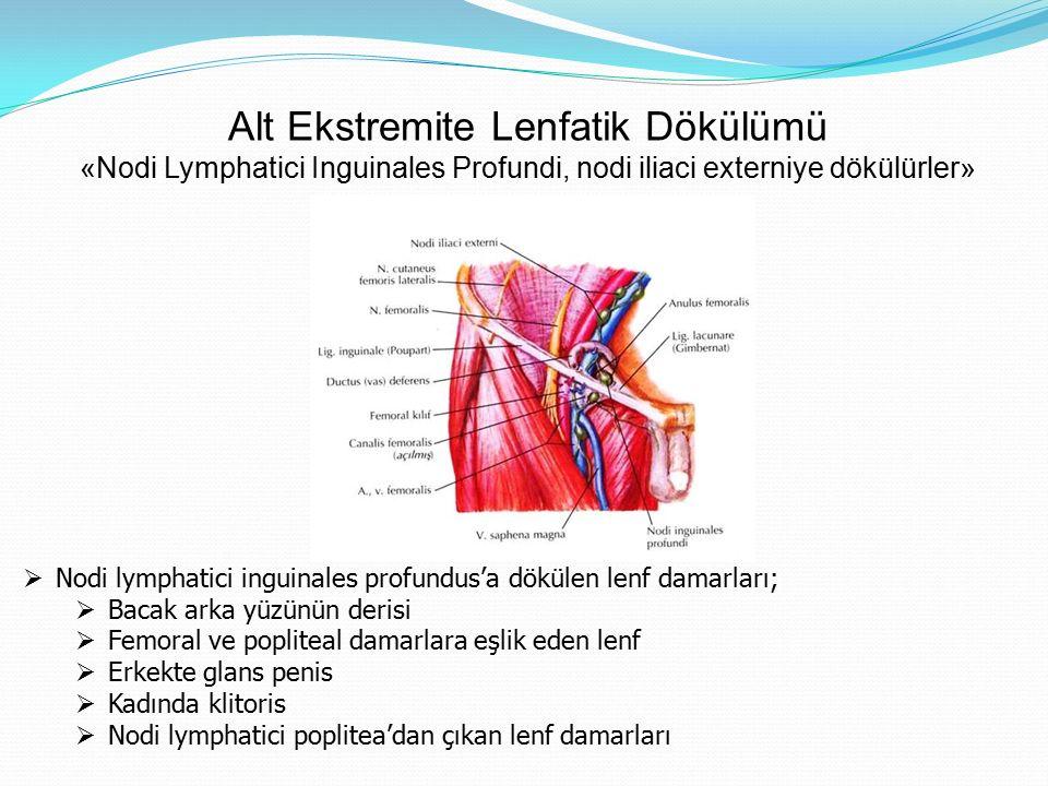Alt Ekstremite Lenfatik Dökülümü «Nodi Lymphatici Inguinales Profundi, nodi iliaci externiye dökülürler»  Nodi lymphatici inguinales profundus'a dökü