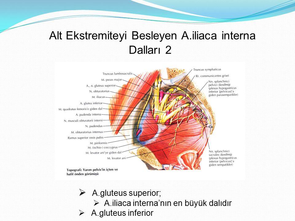 Gluteal Arterler'in Gluteal Bölgedeki Görünümü  A.
