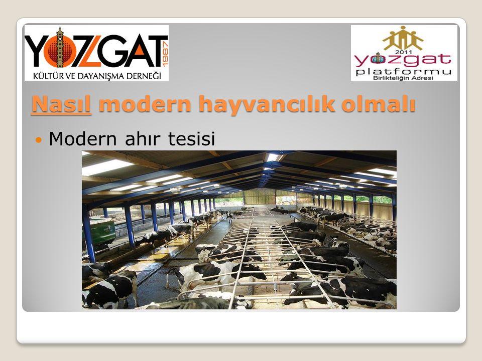 Nasıl modern hayvancılık olmalı Modern ahır tesisi