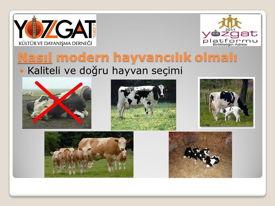 Nasıl modern hayvancılık olmalı Kaliteli ve doğru hayvan seçimi