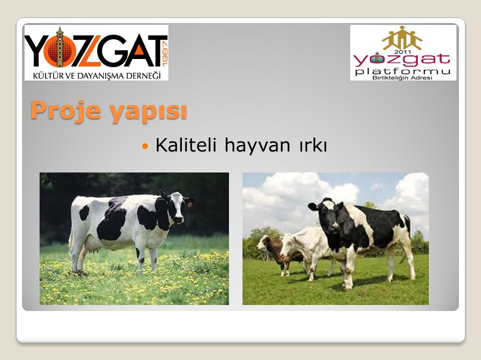 Proje yapısı Kaliteli hayvan ırkı