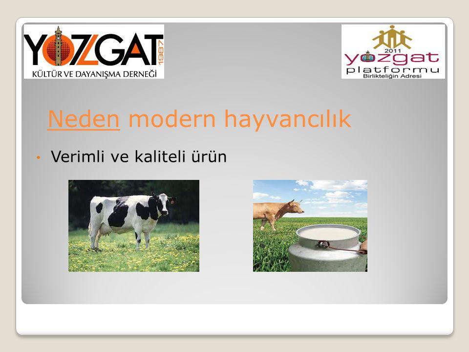 Neden modern hayvancılık Verimli ve kaliteli ürün